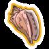 fg_materials_seashells_v2@2x