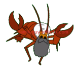 Iraq Lobster 2