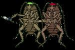 Bad Roaches